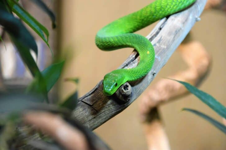 Snake Removal 101: How To Keep Snakes Out Of Your Garden 35 - Flowers & Plants
