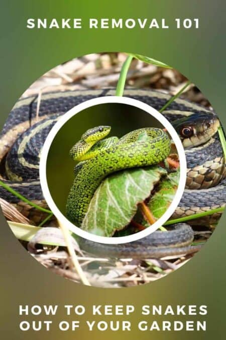 Snake Removal 101: How To Keep Snakes Out Of Your Garden 1 - Flowers & Plants