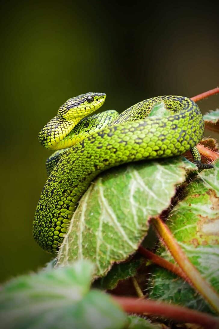 Snake Removal 101: How To Keep Snakes Out Of Your Garden 23 - Flowers & Plants