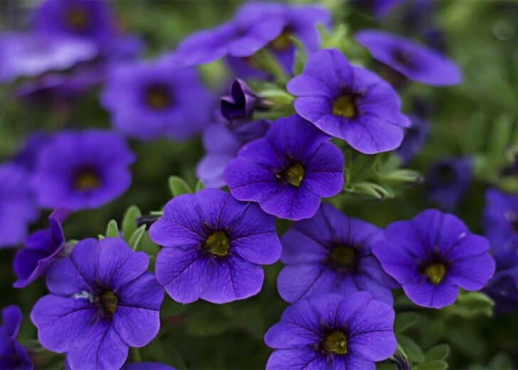 Six Plants That Repel Bugs from Your Garden 21 - Flowers & Plants