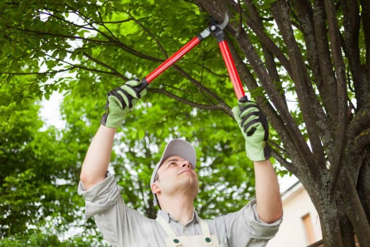 A Beginners Guide to Tree Pruning 9 - Flowers & Plants