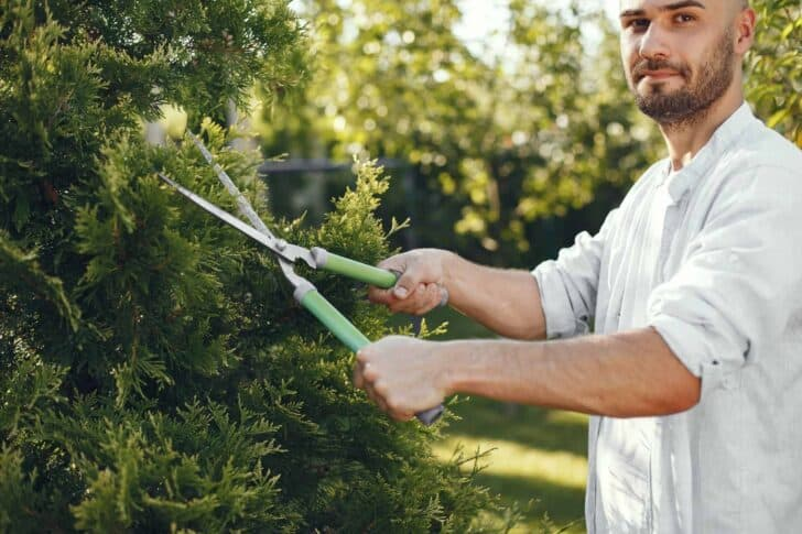 A Beginners Guide to Tree Pruning 11 - Flowers & Plants