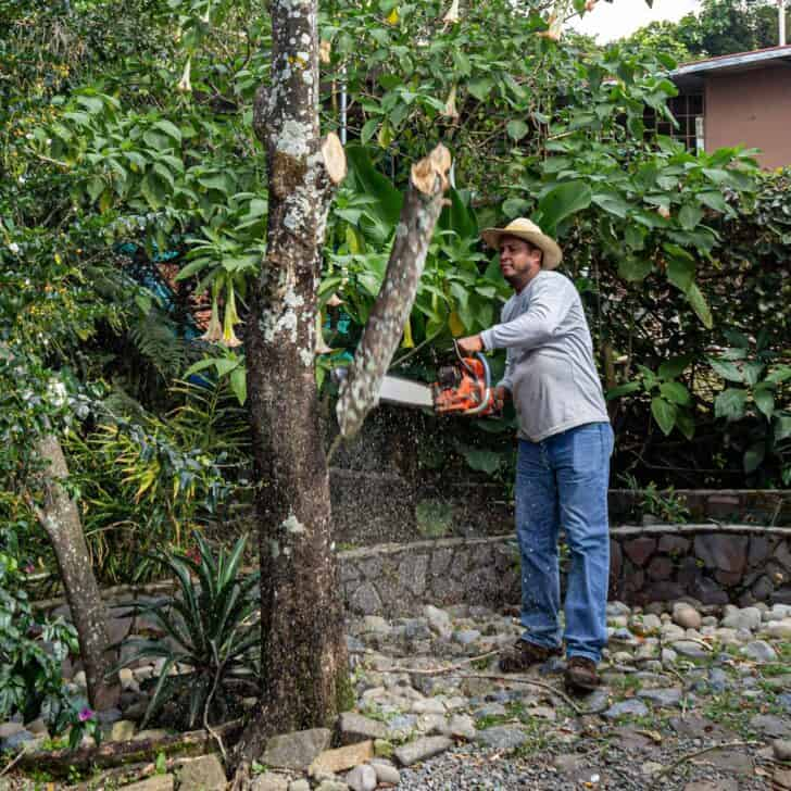 A Beginners Guide to Tree Pruning 13 - Flowers & Plants