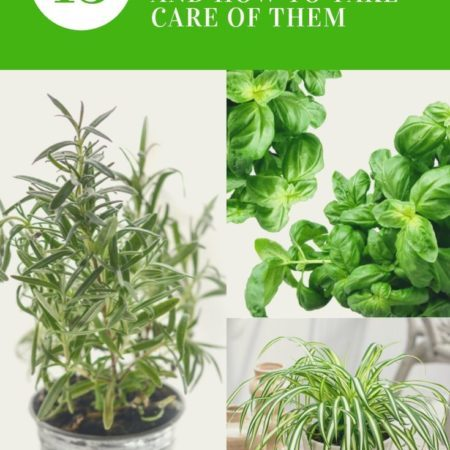 15 Plants for your Indoor Garden and how to take care of them