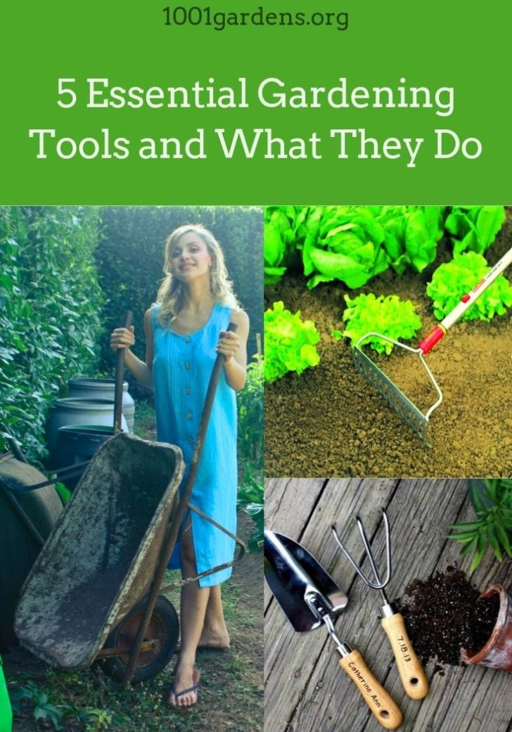 5 Essential Gardening Tools and What They Do