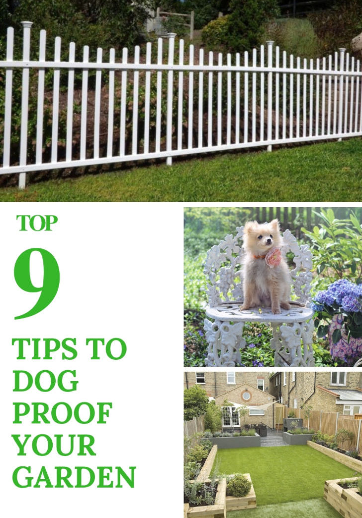 Tips To Dog Proof Your Garden