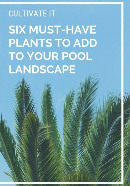 Six Must-have Plants to Add to Your Pool Landscape