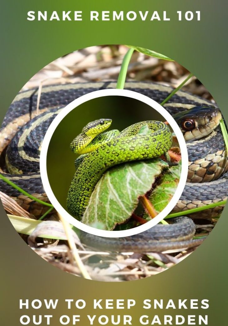 How To Keep Snakes Out Of Your Garden